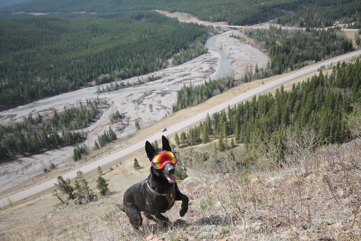 Dog running up a hill